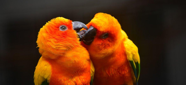 parrot-2555294_1920