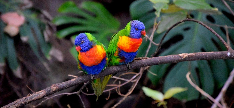 parrots-2911077_1920